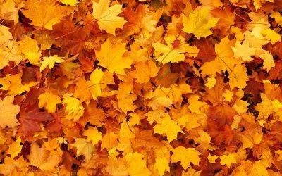 Wenn im Herbst die Blätter fallen – Laub richtig entsorgen