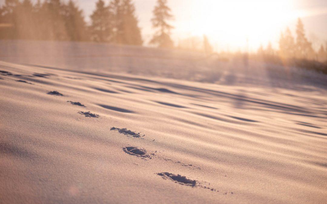 Winterwandertag 2020 – Ein Rückblick in Bildern