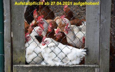 Aufstallungspflicht für Geflügel aufgehoben