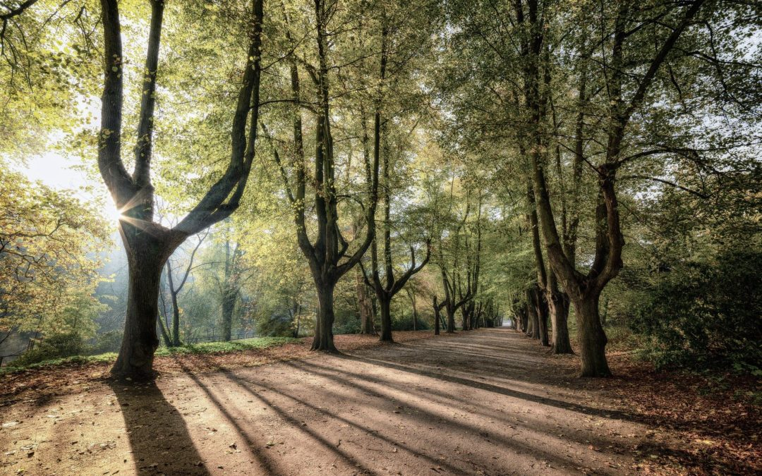 Stadtpark Schöneck: Interessensbekundung für Planungsleistungen